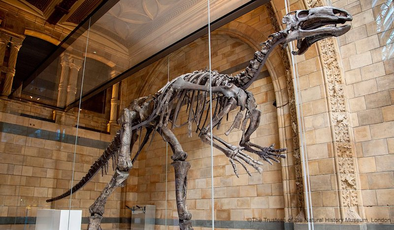 globedge-travel-london-natural-history-museum-dinosaurs